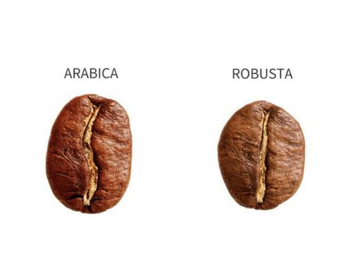 Arbica-oder-Robusta-500x375